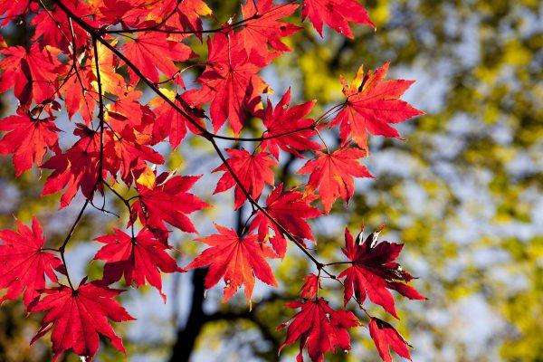 季節の色言葉 ~紅葉編~