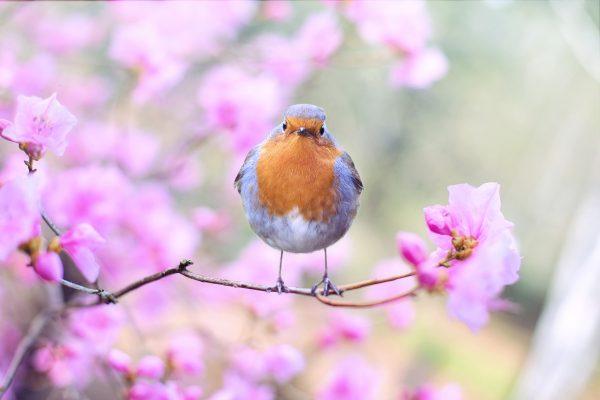 あなたの春のイメージ、何色ですか?